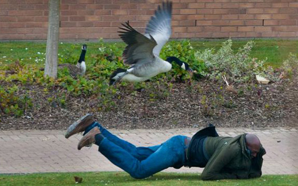 Residential Security: The Guard Goose